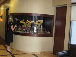 Custom 550 gallon radius aquarium in Rocklin, Ca